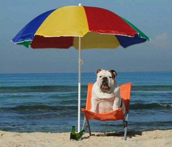 Οχι άλλοι σκύλοι σε θάλασσες και παραλίες