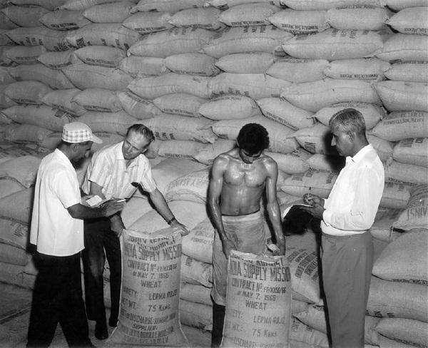 sementi destinate all'India 1966. CIMMYT