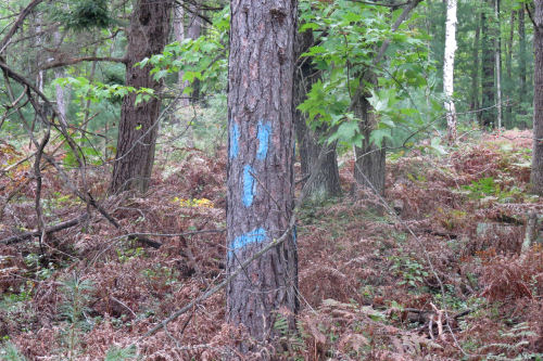 funny trail markers