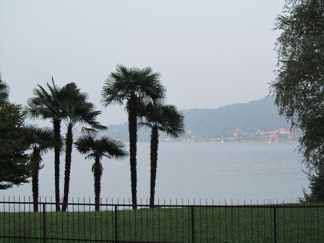 Trachycarpus fortunei In Riva al Lago Maggiore