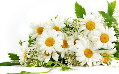 benefit-floral-chamomile-for-health-and-kecantikan.jpg