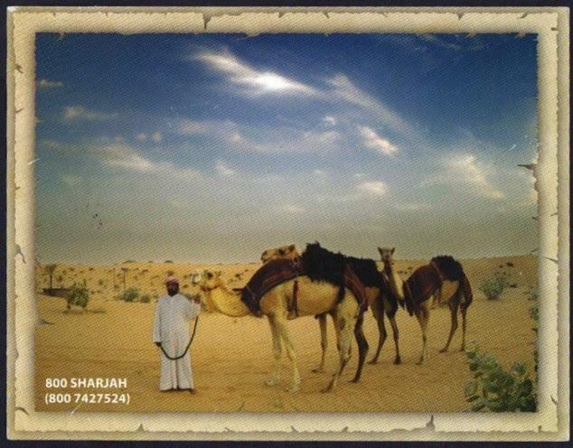 cartes postales du monde les dromadaires de l mirat de sharjah. Black Bedroom Furniture Sets. Home Design Ideas
