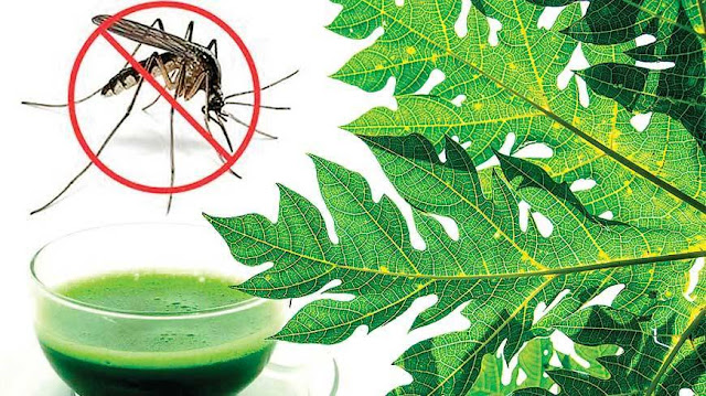 How to Use Papaya Leaf Juice for Dengue Fever?