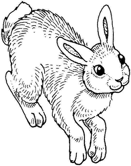 bunnies bunny coloring pages | Dawn Reader: Hippity-Hop-Hop