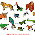 الحيوانات والحشرات في اللغة التركية