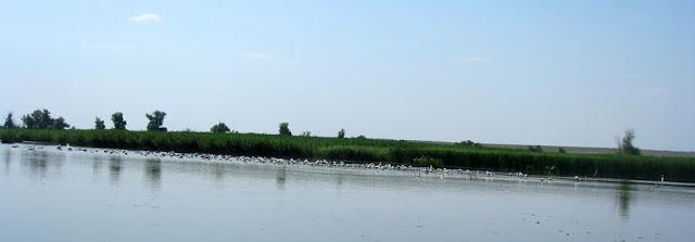 Фото Виталия Бабенко: птицы на Казначейском лимане