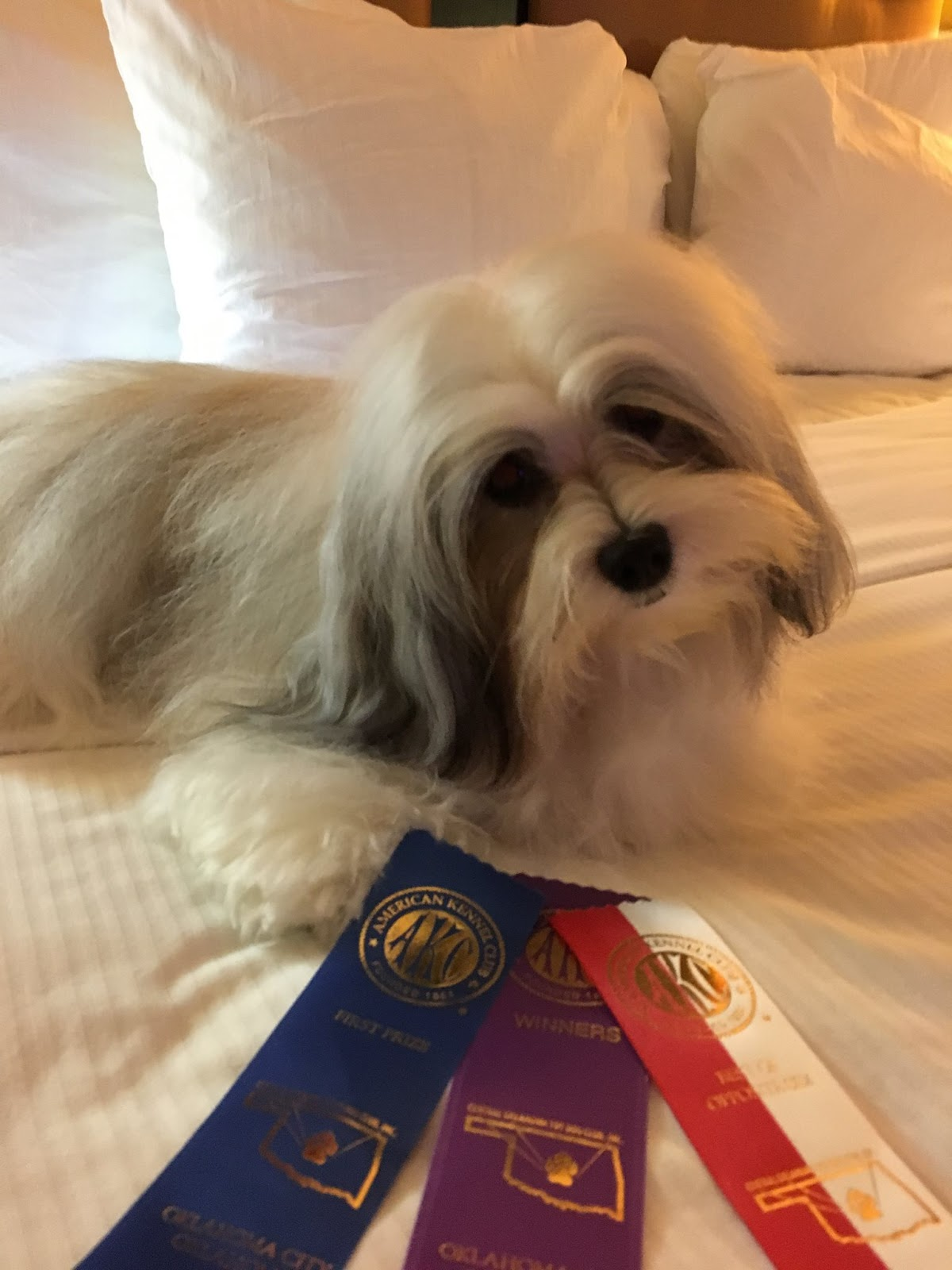 Black Russian Terriers, Bichons & Havanese, Oh My!: Central