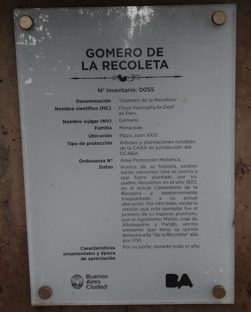 Gomero de La Recoleta, Buenos Aires