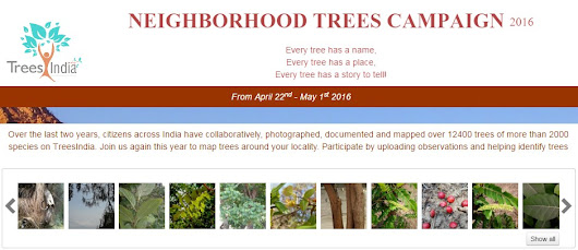 Neighborhood Trees Campaign 2016