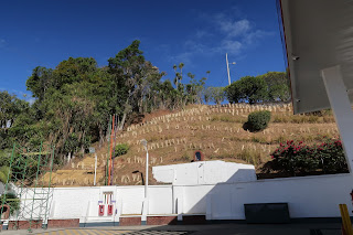 Vetiver on hill next to gas station in Puriscal.