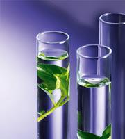χημικοί σωλήνες φυτικά βλαστοκύτταρα σε υγρό