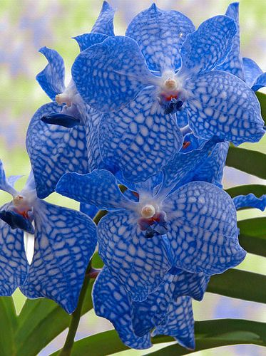 Flower Homes Rare Or Odd Flowers