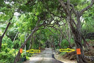 هذه أخطر شجرة في العالم .. لكي تكون بمأمن منها ابتعد 9 أمتار! شاهد ماذا تفعل بك إذا لمستها...