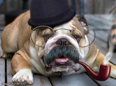 Funny dog mustache - bulldog with glasses smoking a pipe