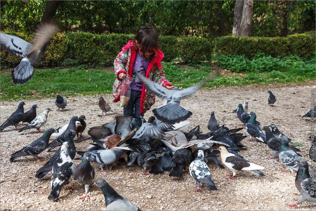 Греция Афины Национальный сад парк голуби