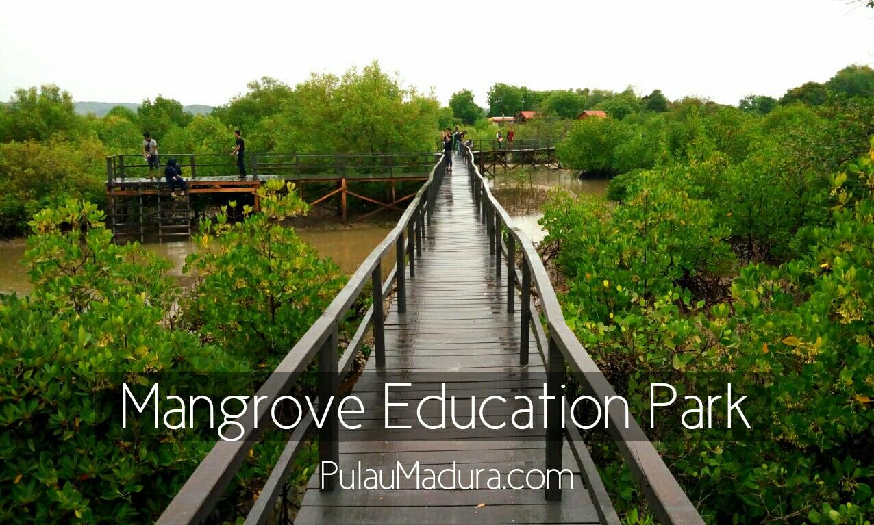 WOW! Ada Obyek Wisata Alam Hutan Mangrove di Desa Labuhan - Bangkalan - Gerbang Pulau Madura