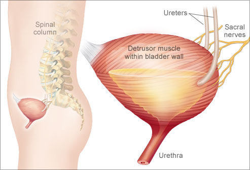 Excessive Water And Overactive Bladder 80