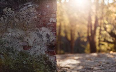 Mur de Briques dans la Forêt - Fond d'Écran en Ultra HD 4k 2160p