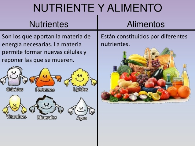 todos los alimentos tienen agua