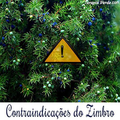 Contraindicações do Zimbro