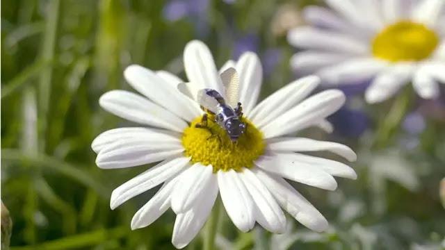 Lebah Robot untuk Tingkatkan Panen Madu