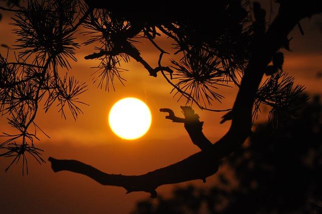 Noite de verão lua cheia árvore