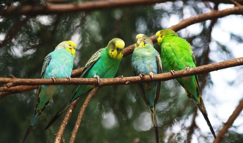 دراسة جدوى فكرة مشروع تربية عصافير الزينة فى مصر 2021