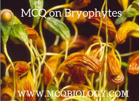 MCQ on Bryophytes (FUNARIA)