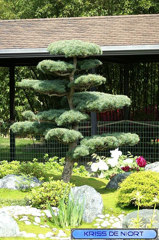 faaxaal photos nature gratuites et libres de droits exemple d 39 arbuste taill taille en. Black Bedroom Furniture Sets. Home Design Ideas