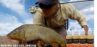 Essen Ikan Mas Aroma Walang Sangit