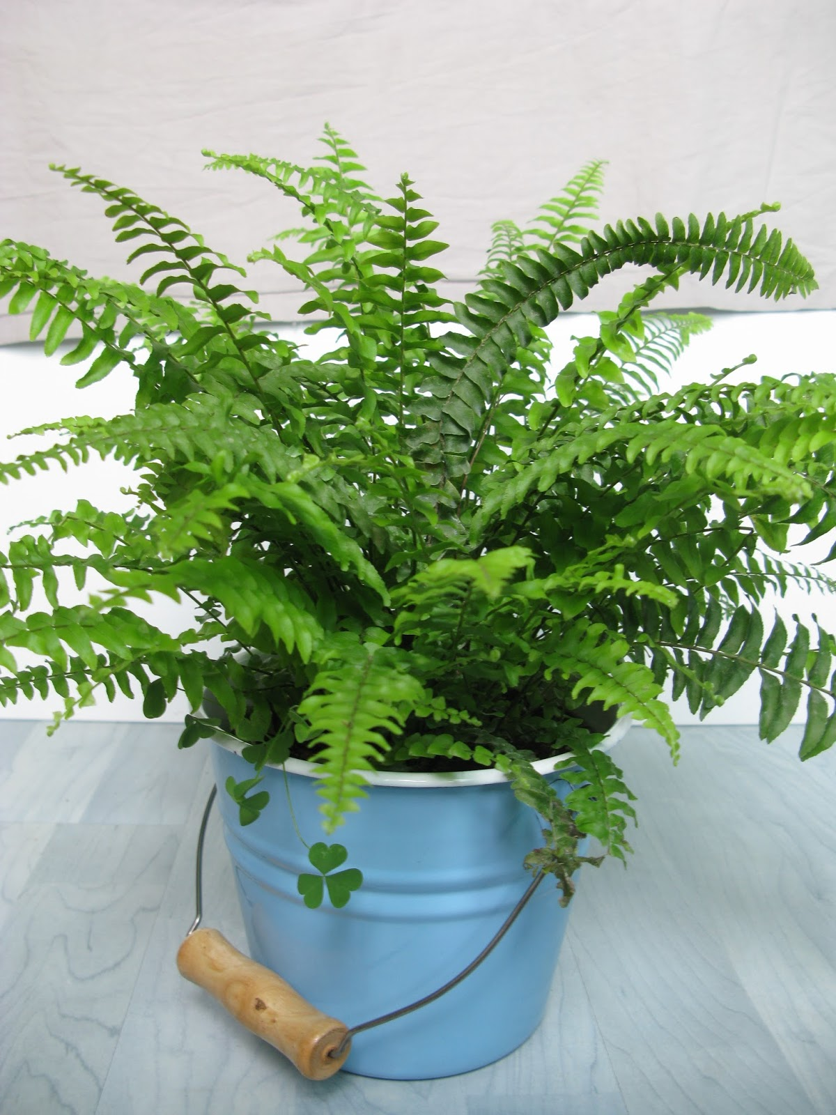 15 Air Purifying Houseplants   Clean The Air In Your Home With These NASA Approved Air-Cleaning Houseplants
