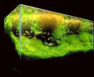 plantas para acuario de agua dulce