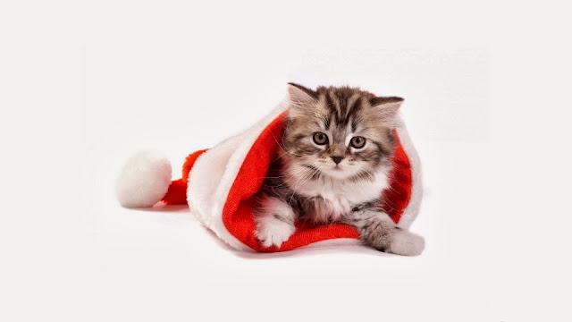 Afbeelding van katje in kerstmuts