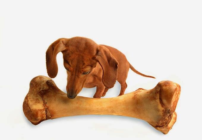 Osso de cachorro