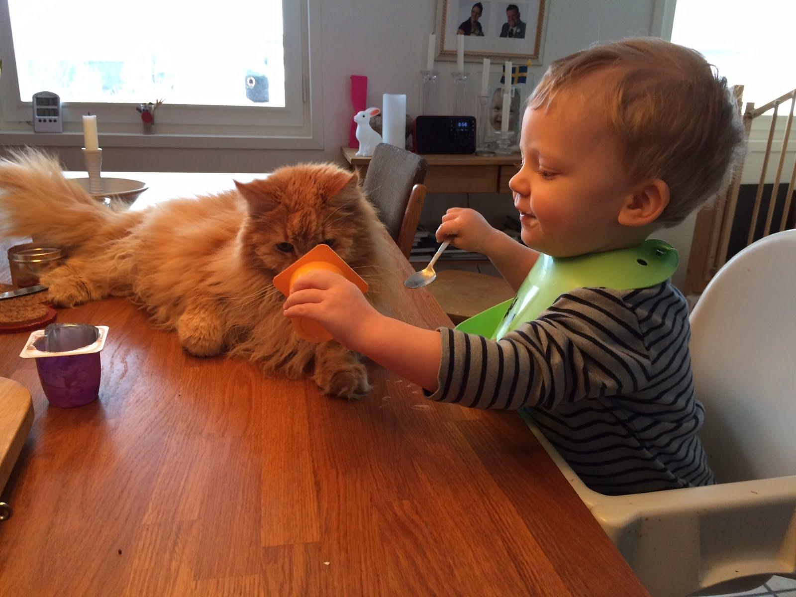 Zammy och sonen delar frukost