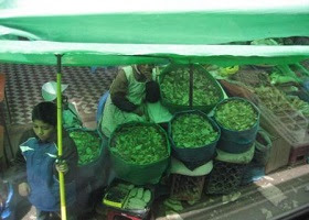 Selling the coca leaves in a market.