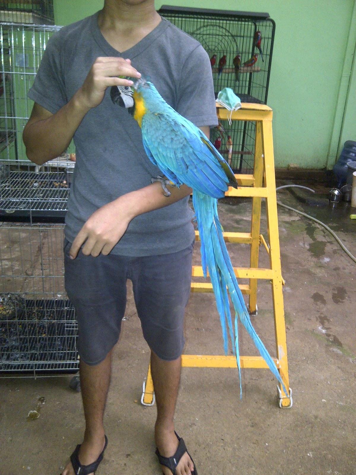 Unduh 420+  Gambar Burung Macaw HD Paling Unik
