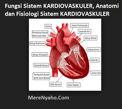 Fungsi Sistem KARDIOVASKULER, Anatomi dan Fisiologi Sistem KARDIOVASKULER
