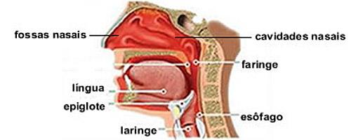 10 funções corporais que continuam mesmo depois da morte - Sistema vocal