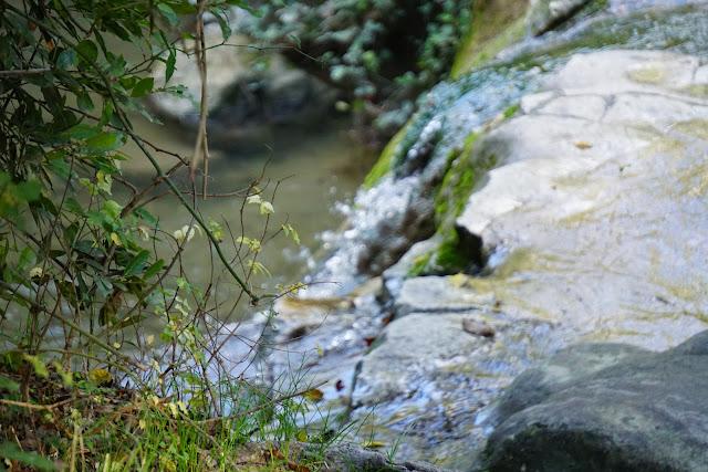 בריכות מים בנחל השופט