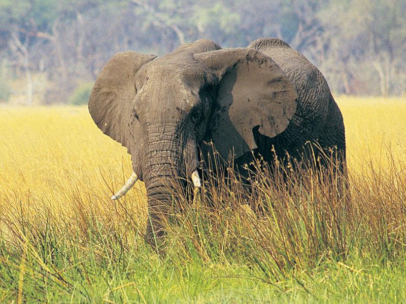 savanna biome animals