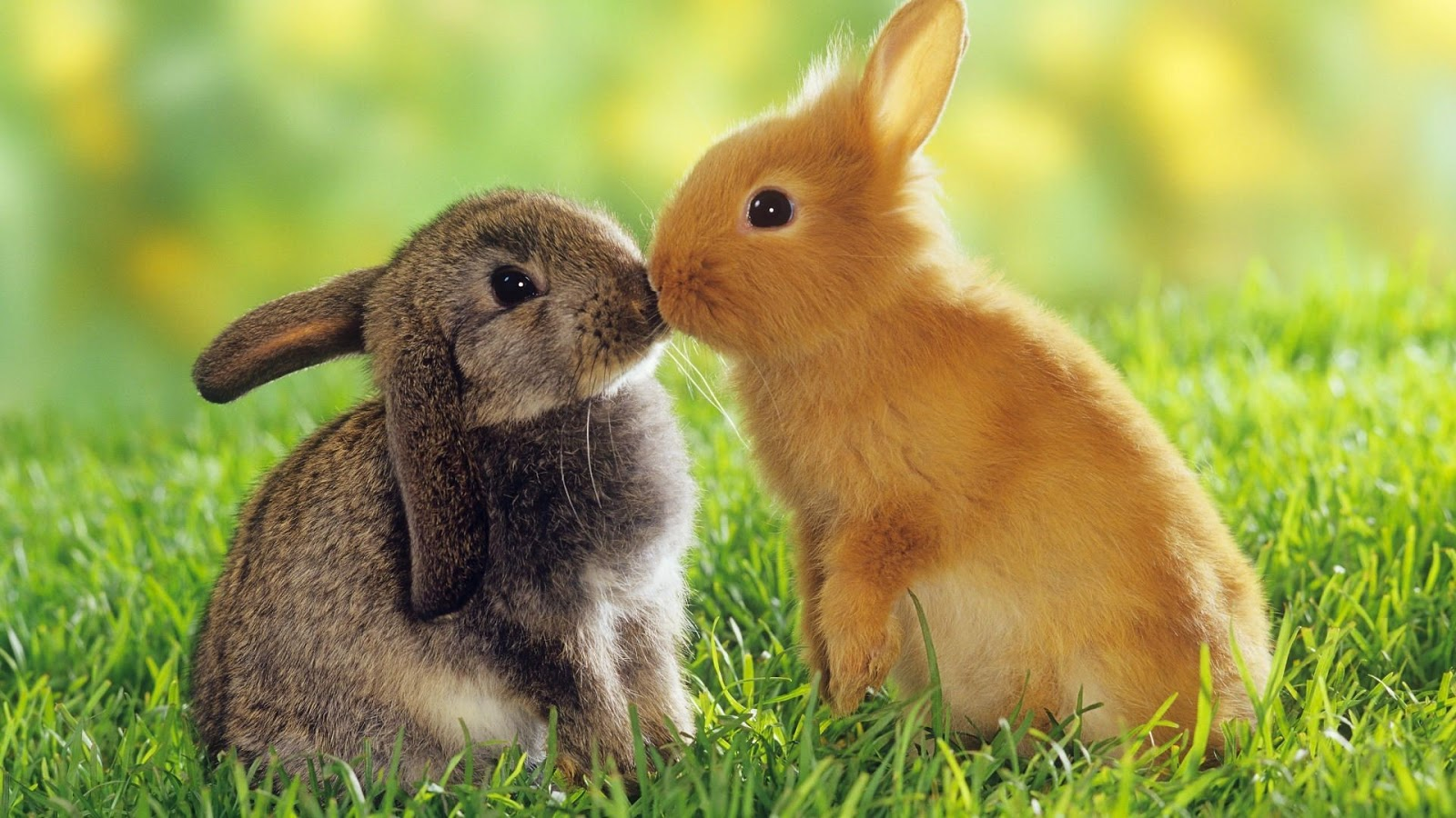 All Wallpapers: Animals Love HD New Wallpapers 2013
