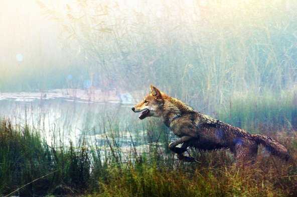 WOLF TOTEM: Film Ciamik Tentang Gengis Khan dan Filososfi Berburu Serigala