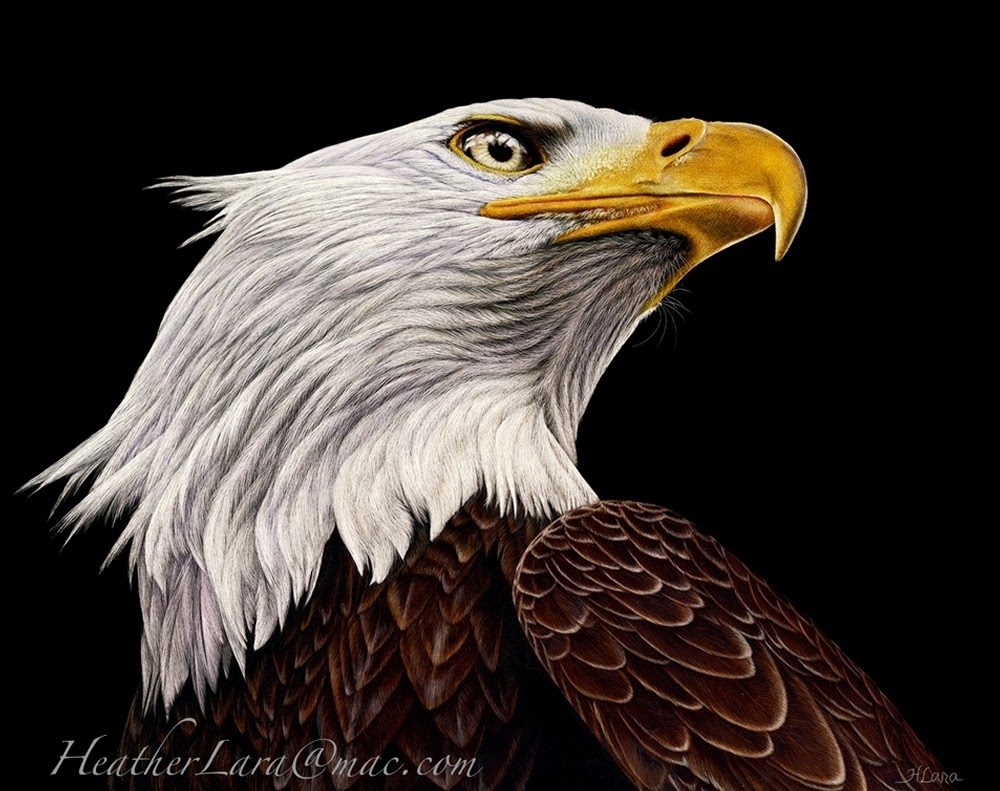 06-Eagle-Heather-Lara-Hyper-realistic-Animal-Scratchboard-Drawings-Wildlife-www-designstack-co