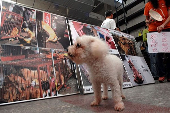 Taiwan Is The First Asian Country To Ban Eating Dogs And Cats