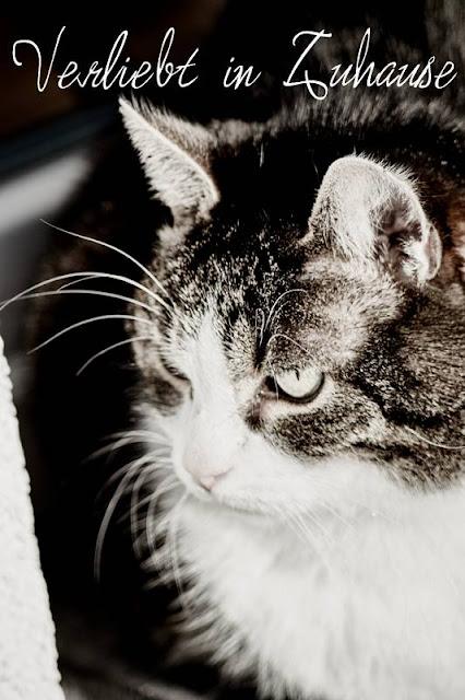 Katzenfotografie -Bild nach Bearbeitung