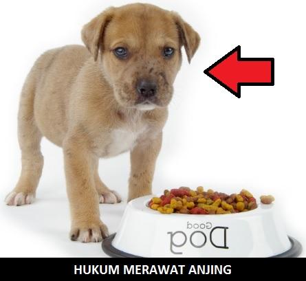 Hukum Asli! Memelihara Anjing Haram Atau Halal
