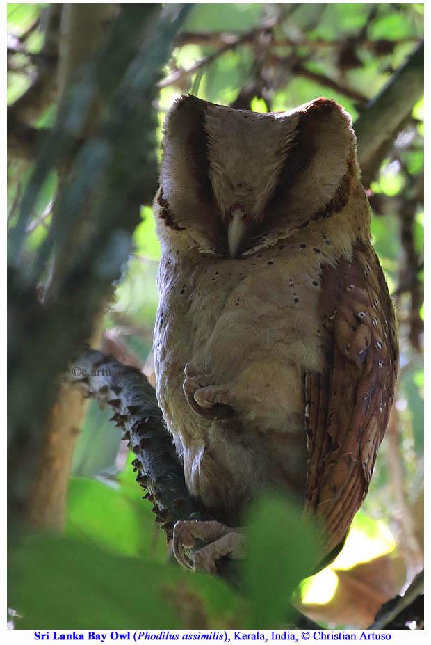 Christian Artuso: Birds, Wildlife - photo#42