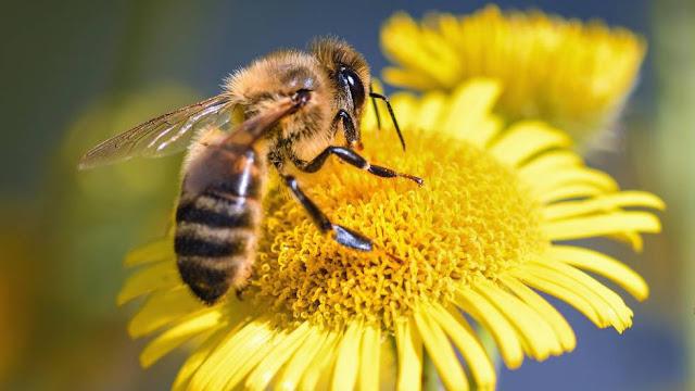 Polinizaci%25C3%25B3n+por+insectos.jpg