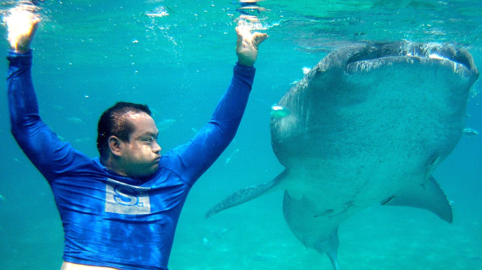 Me and the Whale Shark